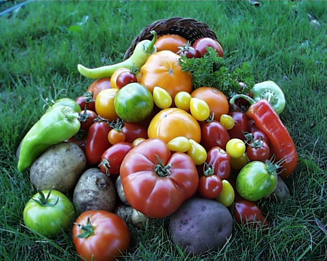 MF Tomatoes and Peppers Grown By Glenna